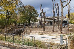Die neue Anlage für Elefanten bietet mehr Spielmöglichkeiten, viel Platz und einen großen Außenpool. Zudem wurde die Trennung von Mensch und Tier schöner gelöst als bei der Vorgänger-Anlage.