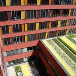 Fehler vermeiden und sich an einer funktionierenden Dachbegrünung erfreuen