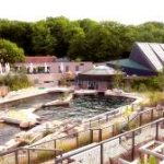 In den Lagunen des Nürnberger Tiergartens haben Delfine und Seelöwen eine neue Heimat gefunden.