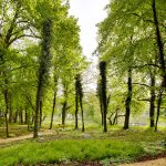 Stadtpark Efeu