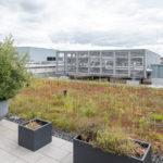 Dachfläche mit Terrassenbegrünung Mayfarth Quartier
