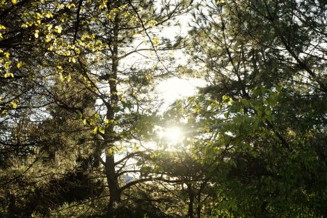 Studie zeigt: Menschen streben nach mehr Natur